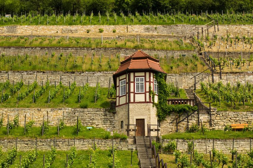 Freyburg Unstrut Wein Weinanbaugebiet Saale-Unstrut