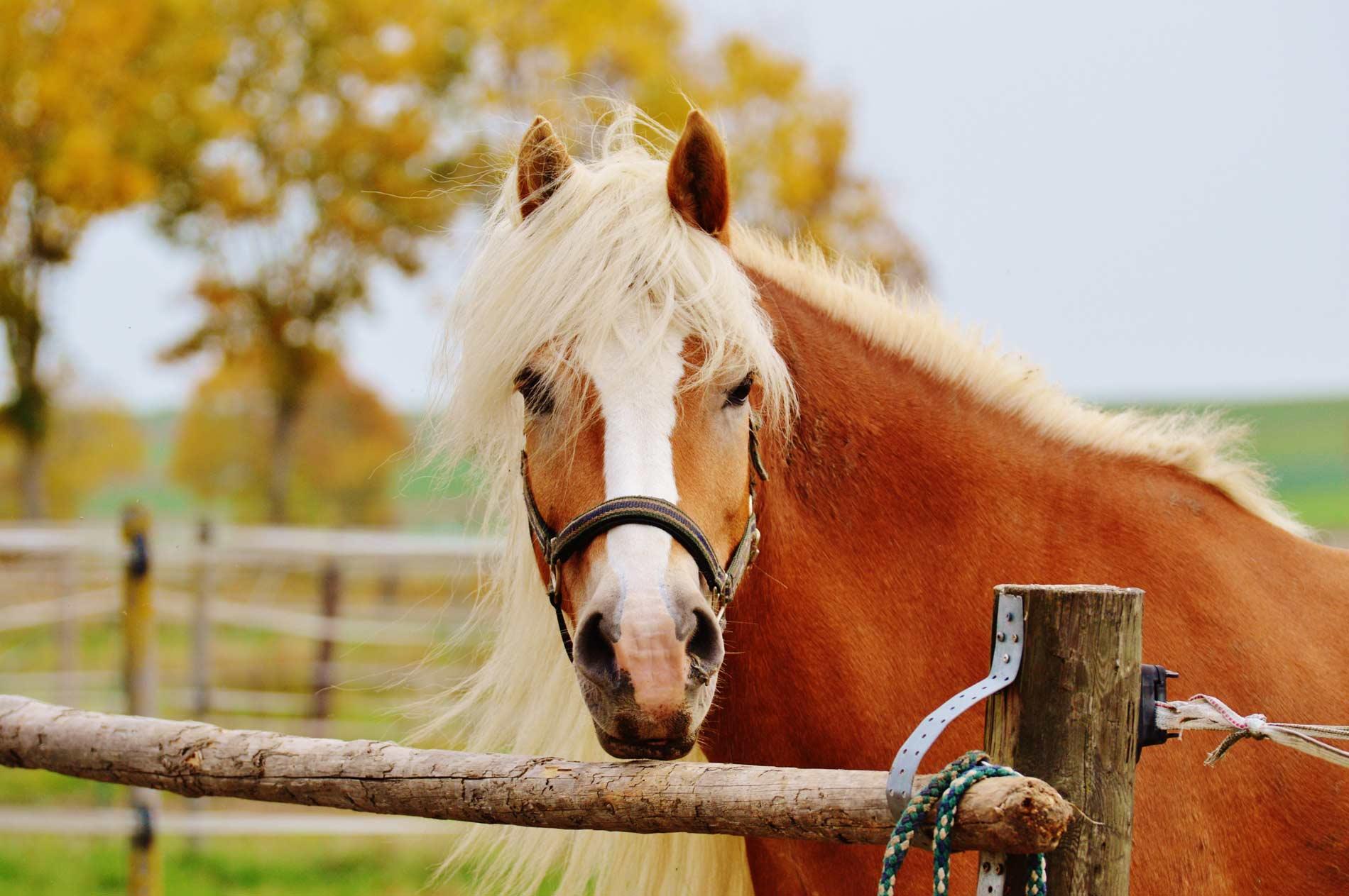Reiter- und Pferdeparadies